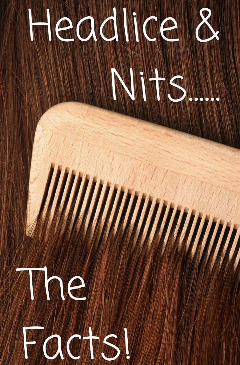 What do nits look like on a lice comb 10