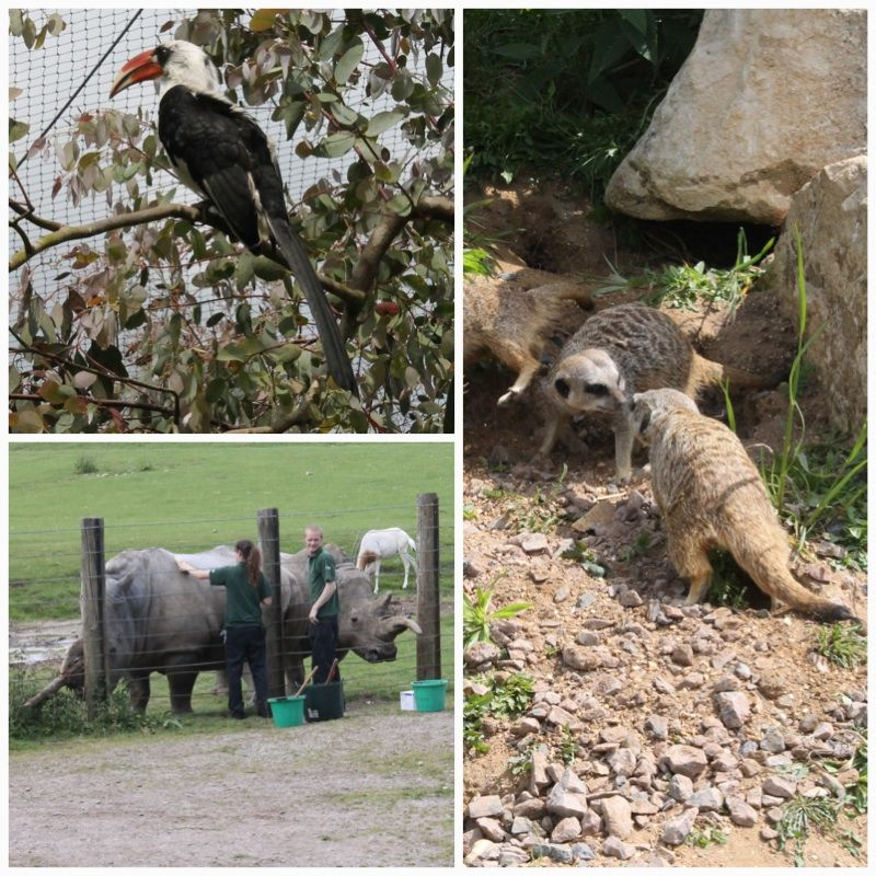 Marwell animals 2