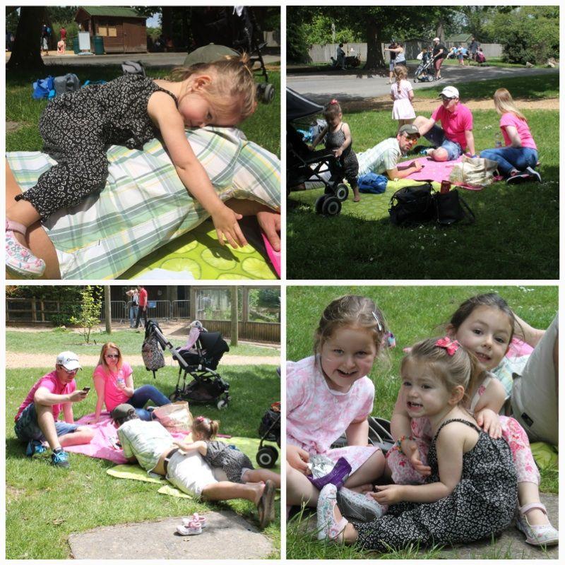 Marwell picnic